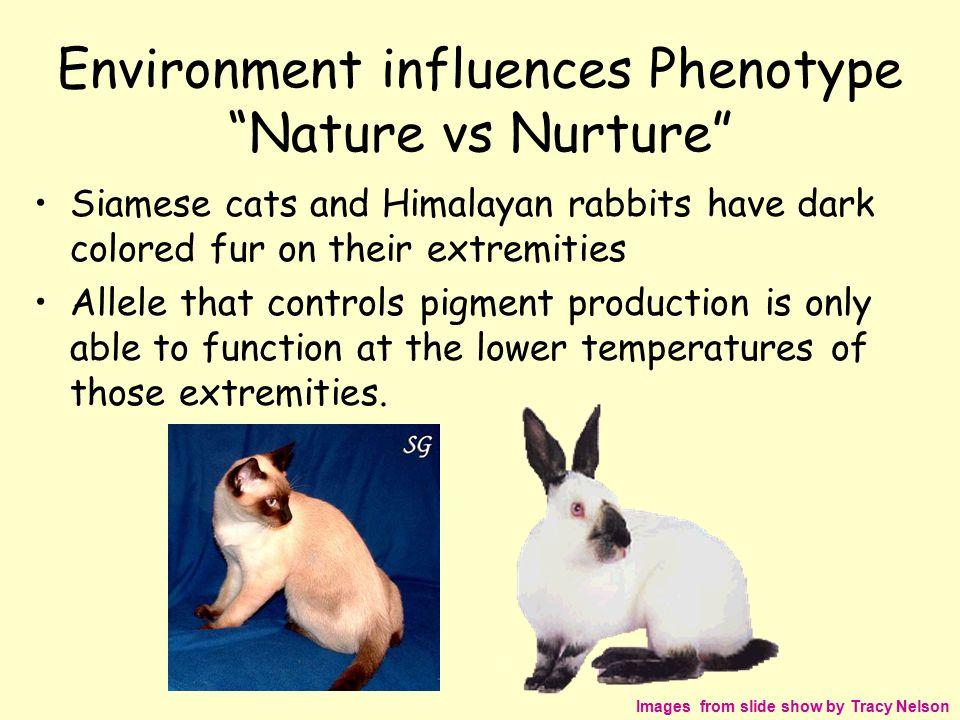Nature Vs Nurture Cats