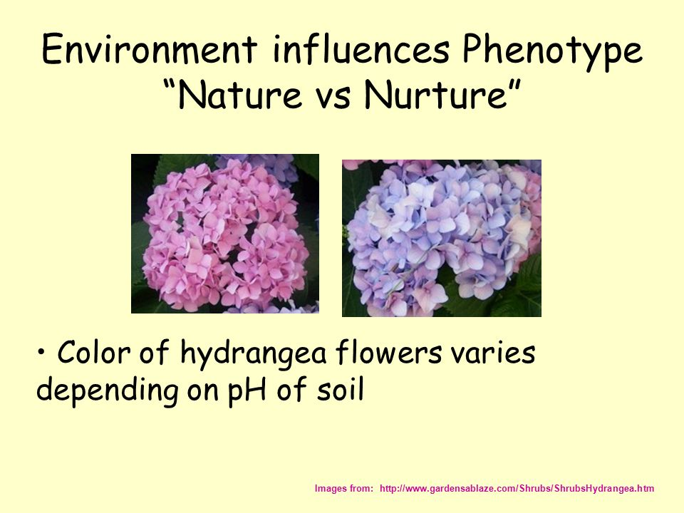 influences of nature and nurture Nature vs nurture examples are people influenced more by nature or nurture is there one answer that is more correct than the other the debate continues.