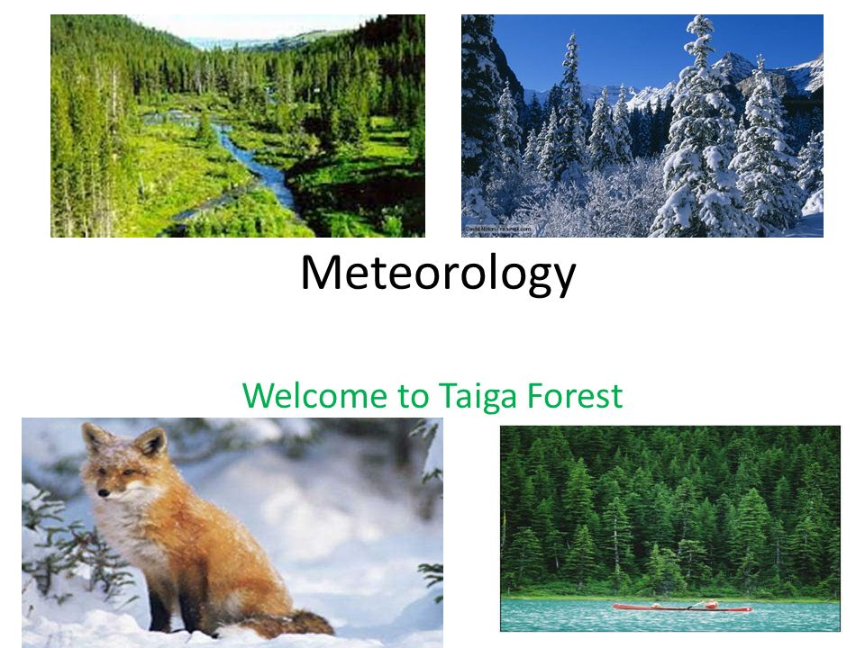 Welcome to Taiga Forest
