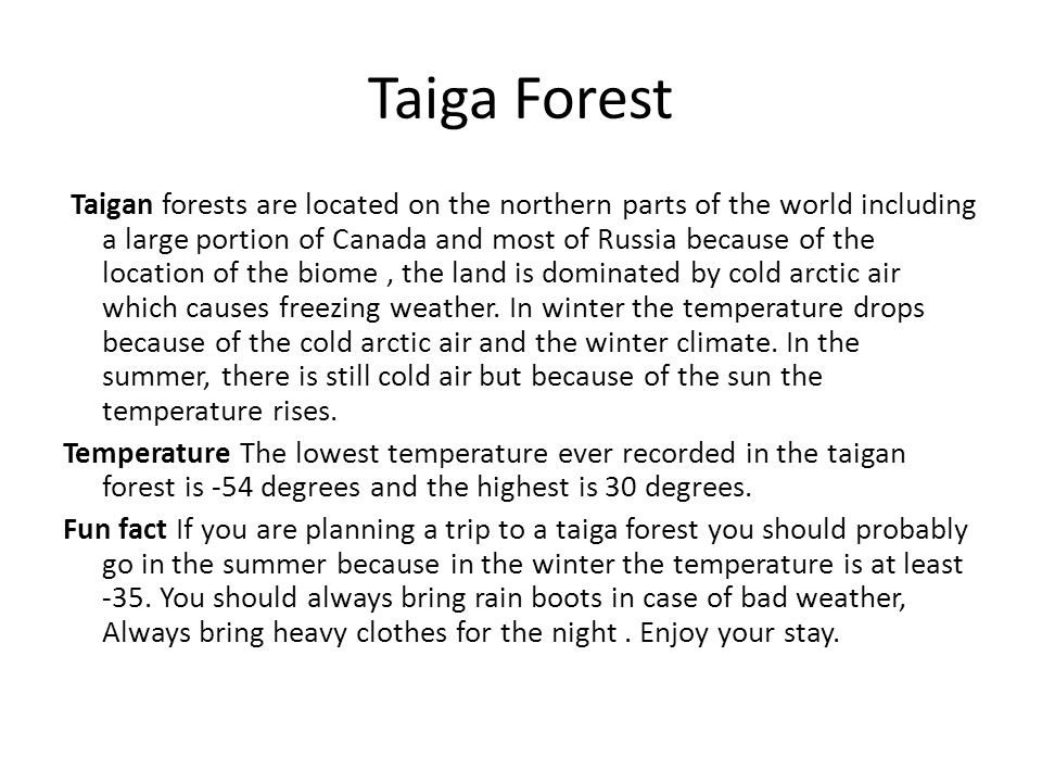 Taiga Forest
