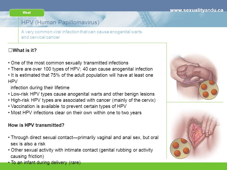 understanding sexually transmitted infections - ppt download, Human Body