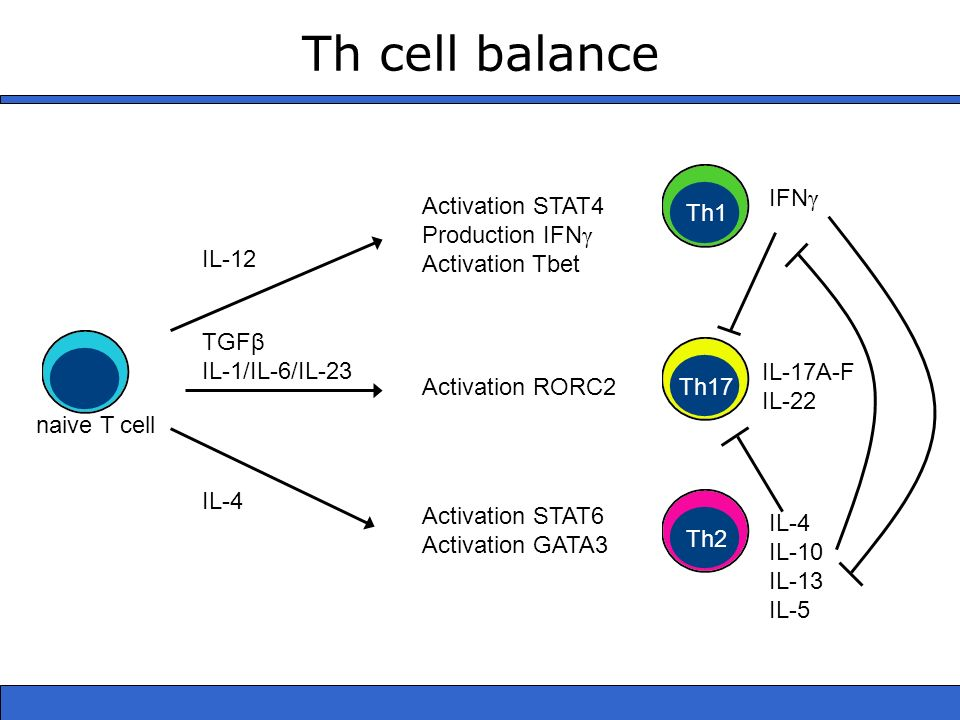 Th cell balance IFNγ Activation STAT4 Production IFNγ Activation Tbet