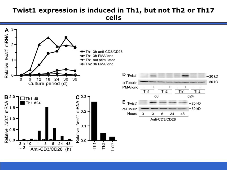 Twist1 expression is induced in Th1, but not Th2 or Th17 cells