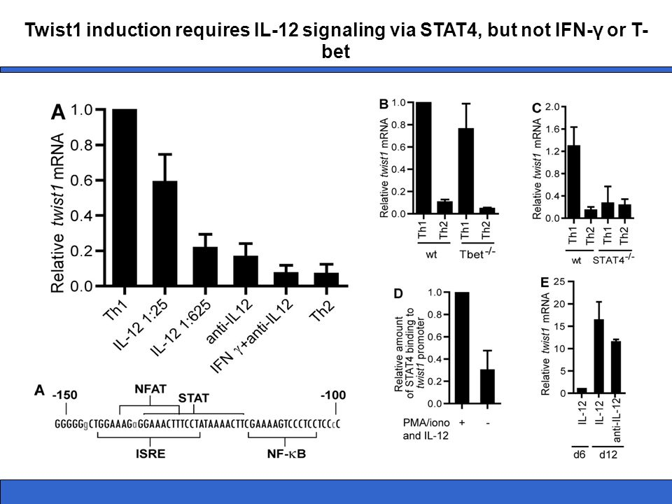 Twist1 induction requires IL-12 signaling via STAT4, but not IFN-γ or T-bet