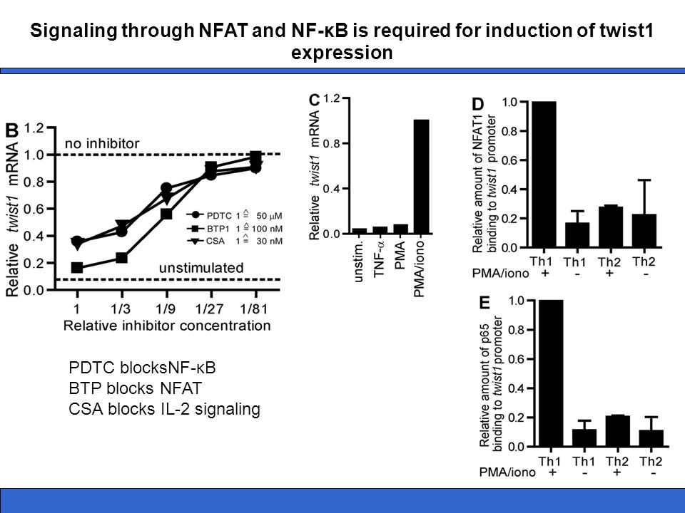 Signaling through NFAT and NF-κB is required for induction of twist1 expression