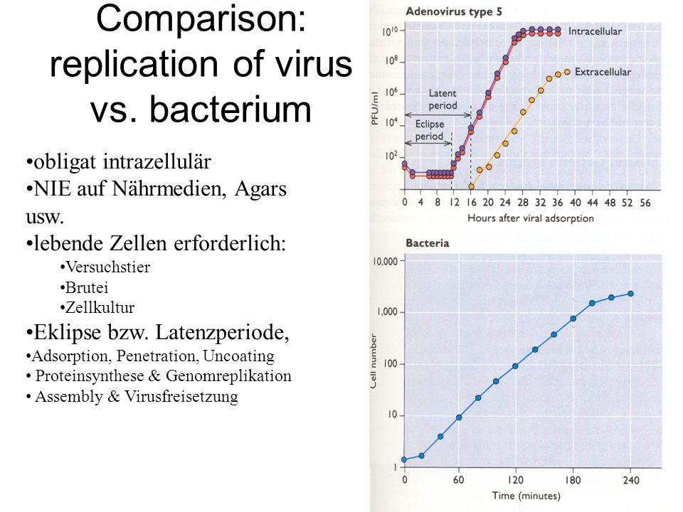 Comparison: replication of virus vs. bacterium