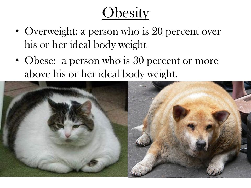 Obesity Overweight: a person who is 20 percent over his or her ideal body weight.