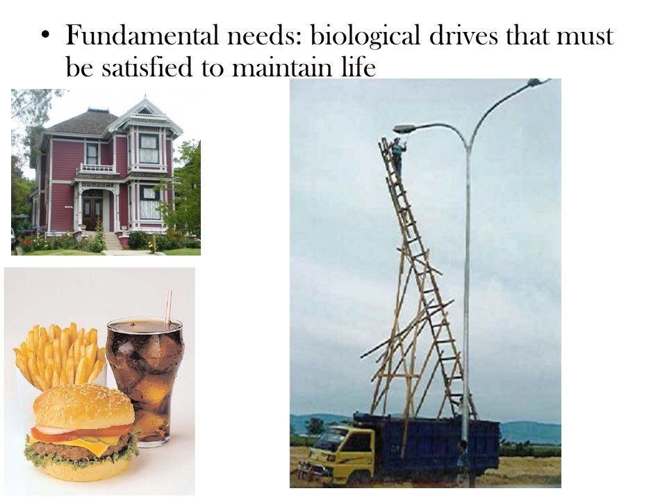 Fundamental needs: biological drives that must be satisfied to maintain life