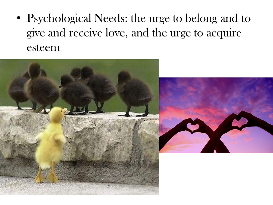 Psychological Needs: the urge to belong and to give and receive love, and the urge to acquire esteem