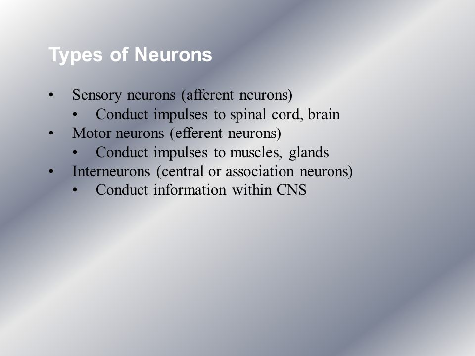 Types of Neurons Sensory neurons (afferent neurons)
