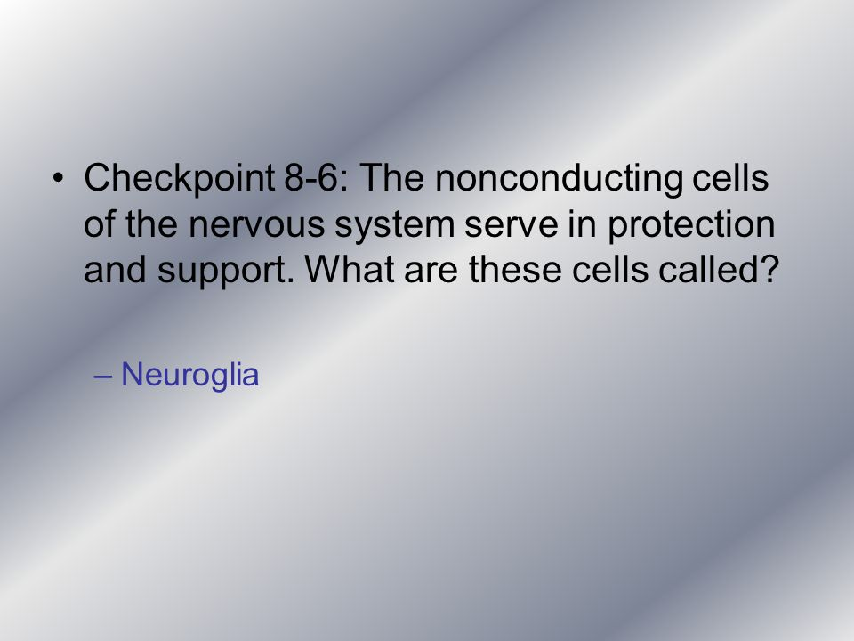 Checkpoint 8-6: The nonconducting cells of the nervous system serve in protection and support. What are these cells called