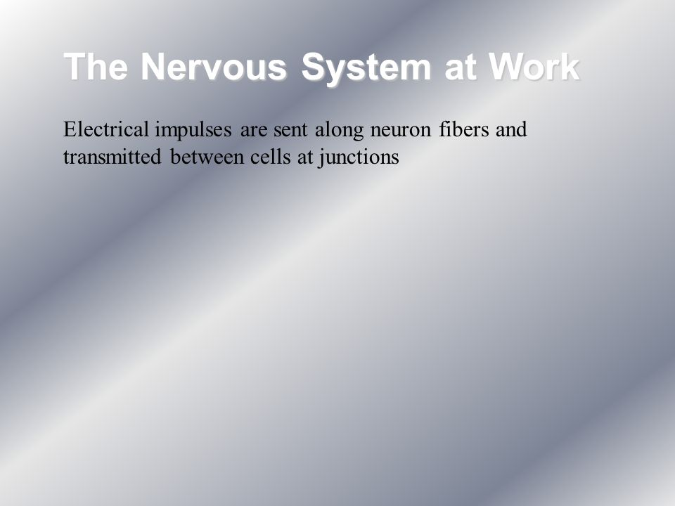 The Nervous System at Work