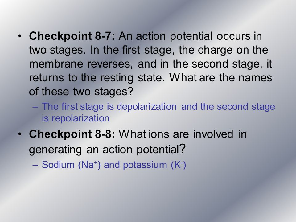 Checkpoint 8-7: An action potential occurs in two stages