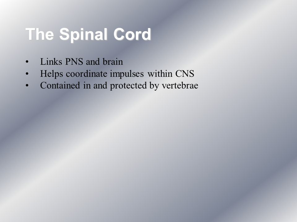 The Spinal Cord Links PNS and brain