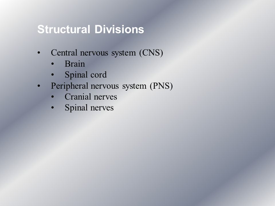 Structural Divisions Central nervous system (CNS) Brain Spinal cord