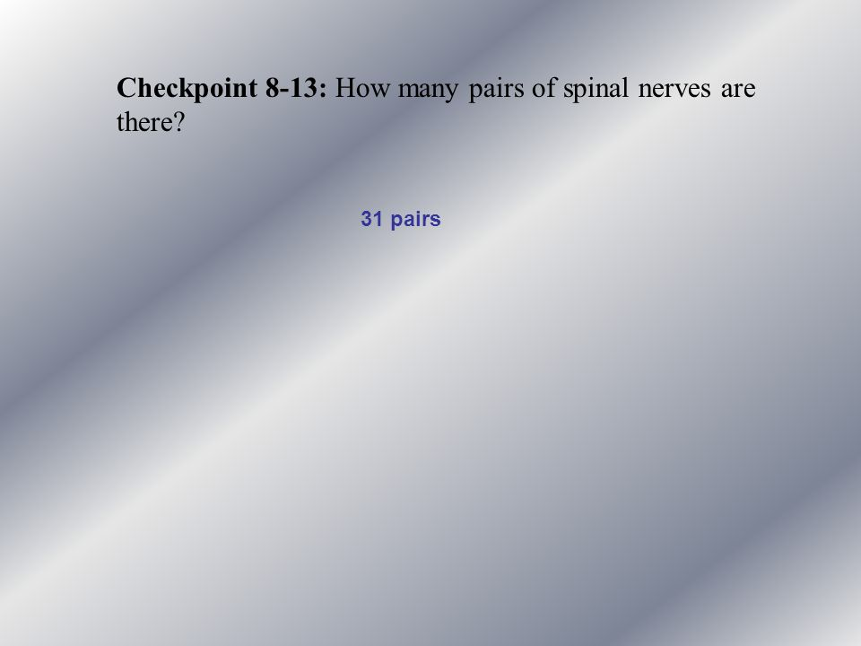Checkpoint 8-13: How many pairs of spinal nerves are there