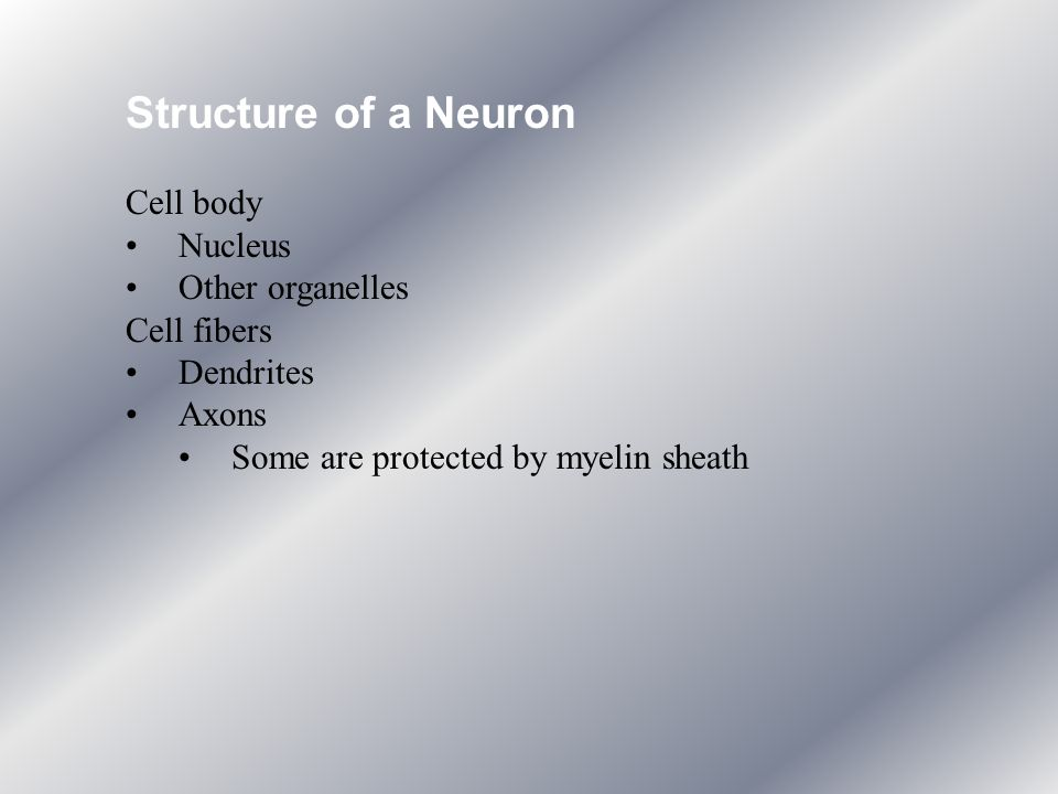 Structure of a Neuron Cell body Nucleus Other organelles Cell fibers
