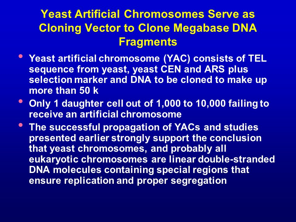 Yeast Artificial Chromosomes Serve as Cloning Vector to Clone Megabase DNA Fragments