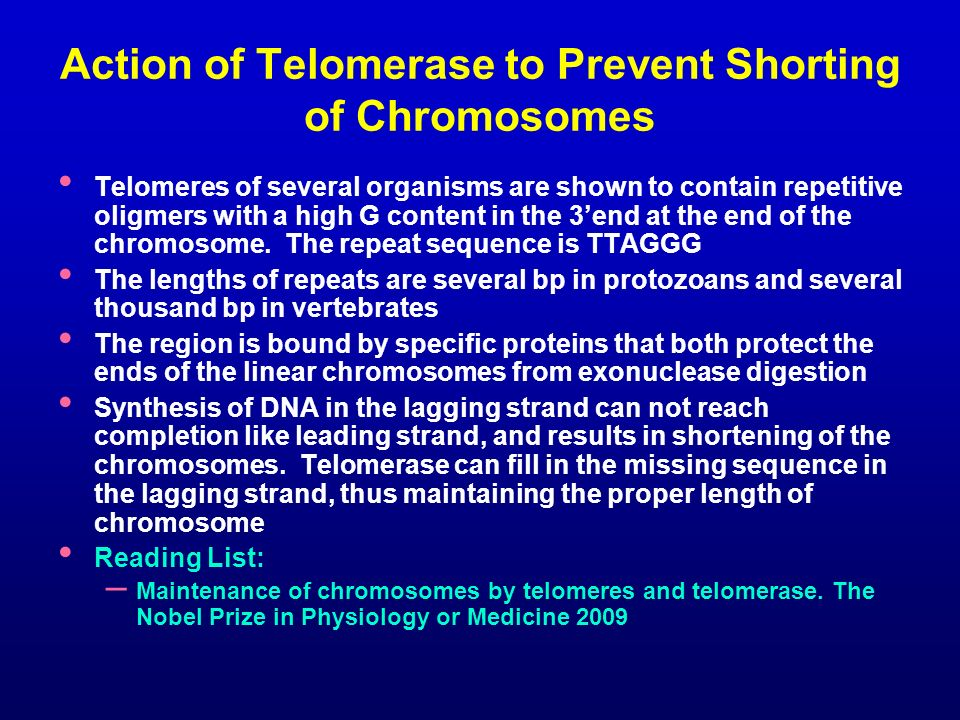 Action of Telomerase to Prevent Shorting of Chromosomes