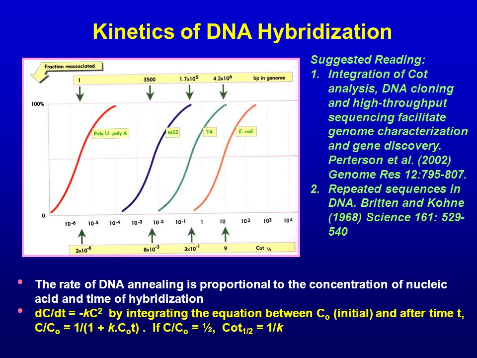 Kinetics of DNA Hybridization
