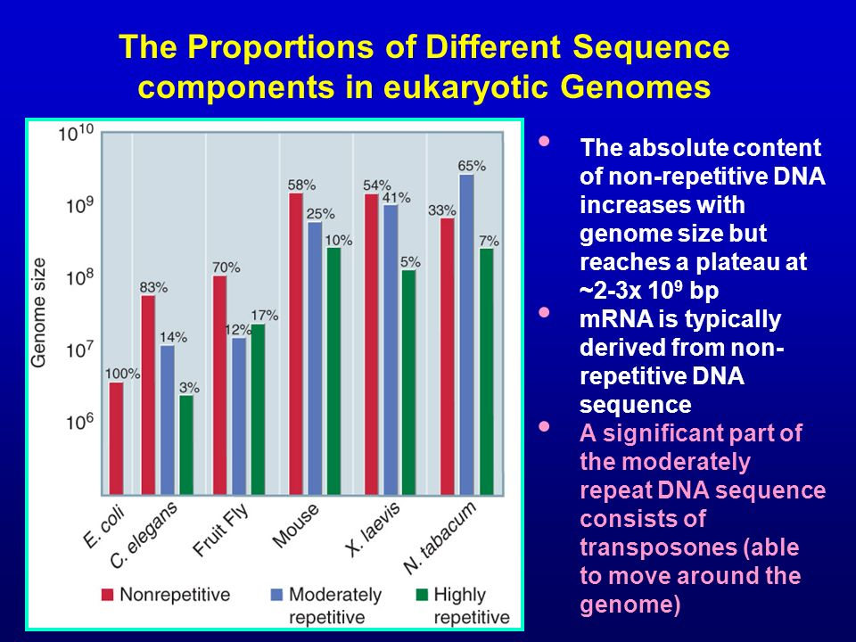 The Proportions of Different Sequence components in eukaryotic Genomes