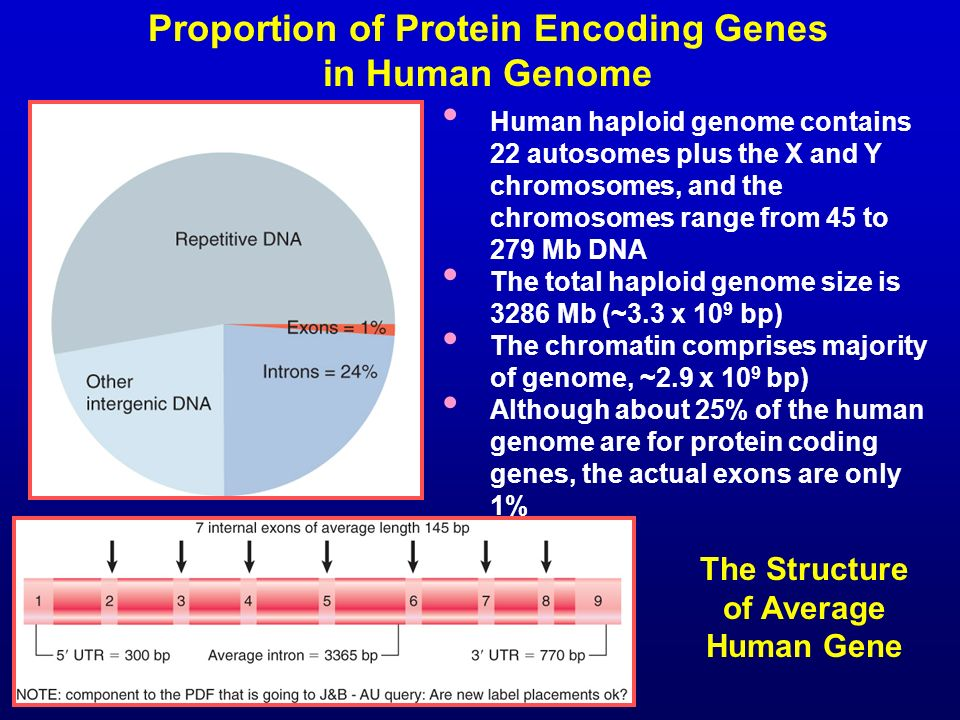 Proportion of Protein Encoding Genes in Human Genome