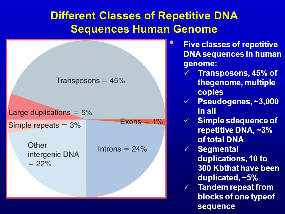 Different Classes of Repetitive DNA Sequences Human Genome