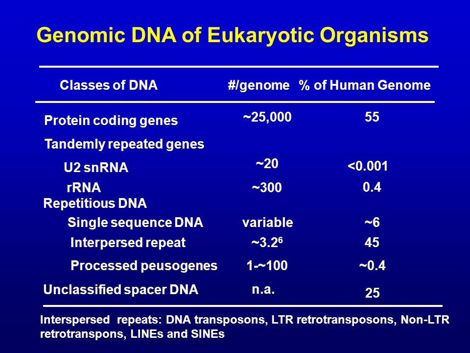Genomic DNA of Eukaryotic Organisms