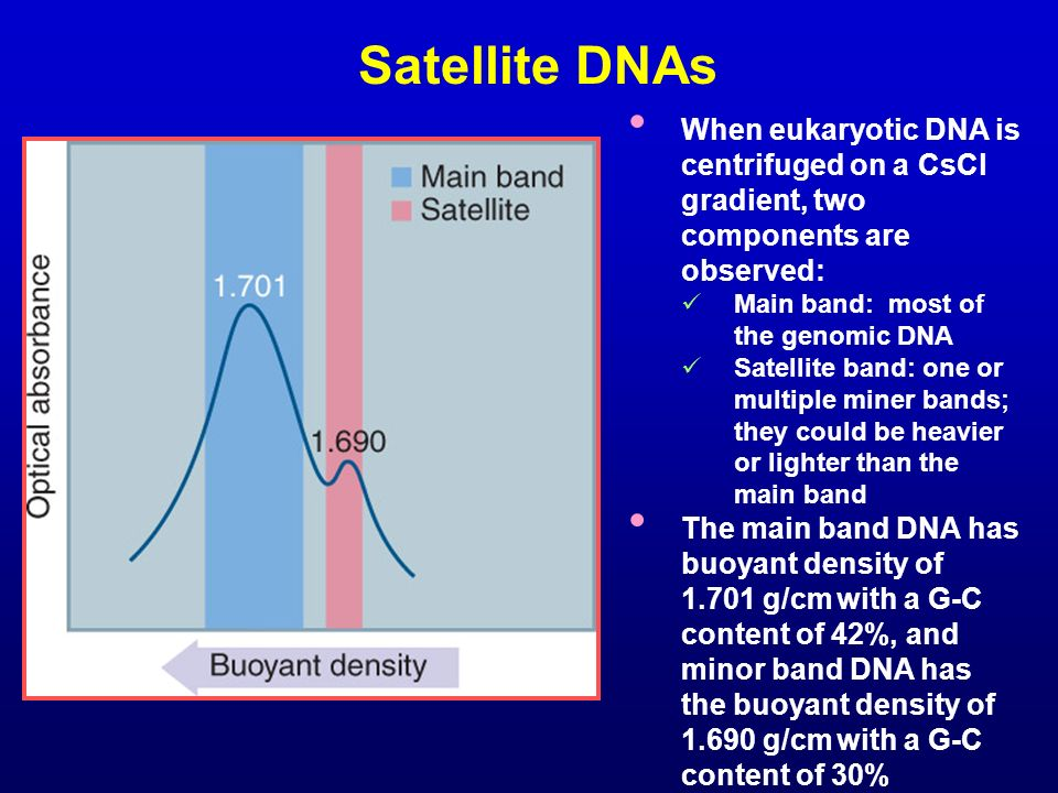 Satellite DNAs When eukaryotic DNA is centrifuged on a CsCl gradient, two components are observed: Main band: most of the genomic DNA.