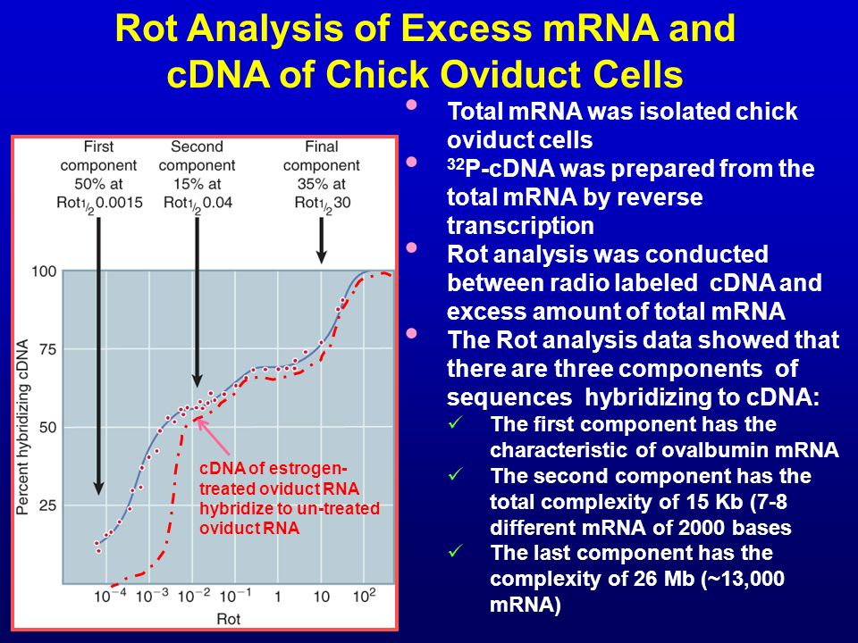 Rot Analysis of Excess mRNA and cDNA of Chick Oviduct Cells