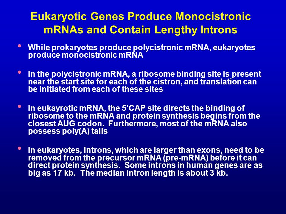 Eukaryotic Genes Produce Monocistronic mRNAs and Contain Lengthy Introns