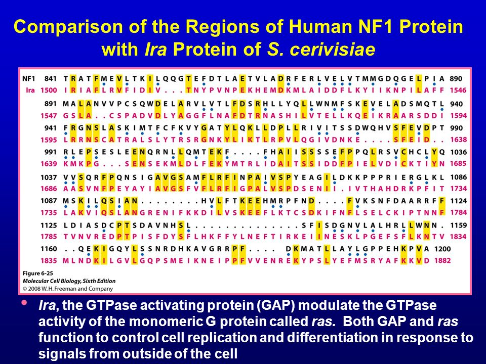 Comparison of the Regions of Human NF1 Protein with Ira Protein of S