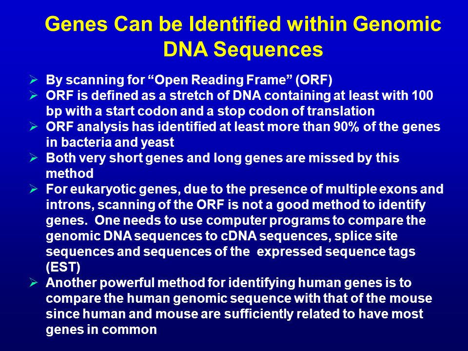 Genes Can be Identified within Genomic DNA Sequences