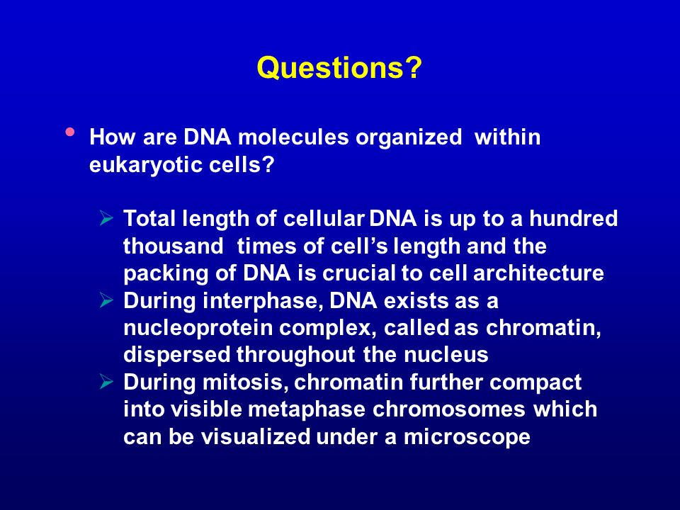 Questions How are DNA molecules organized within eukaryotic cells