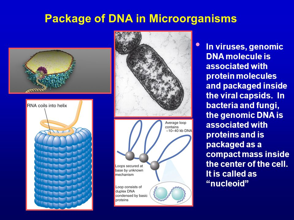 Package of DNA in Microorganisms