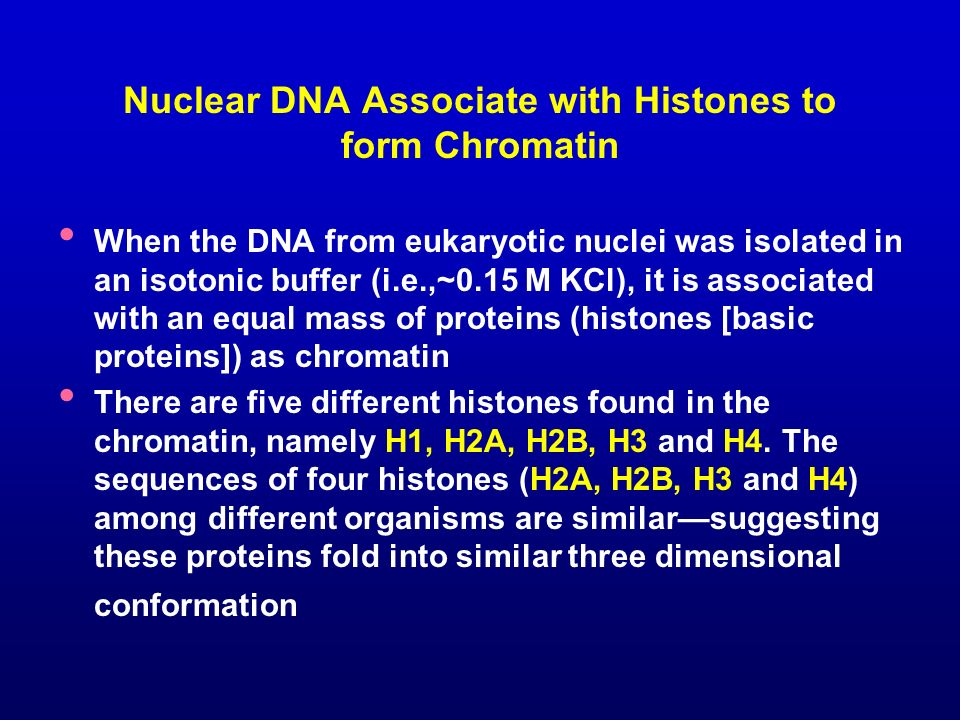 Nuclear DNA Associate with Histones to form Chromatin