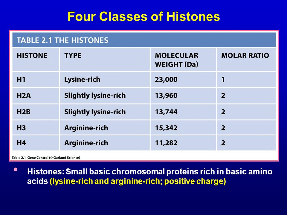 Four Classes of Histones