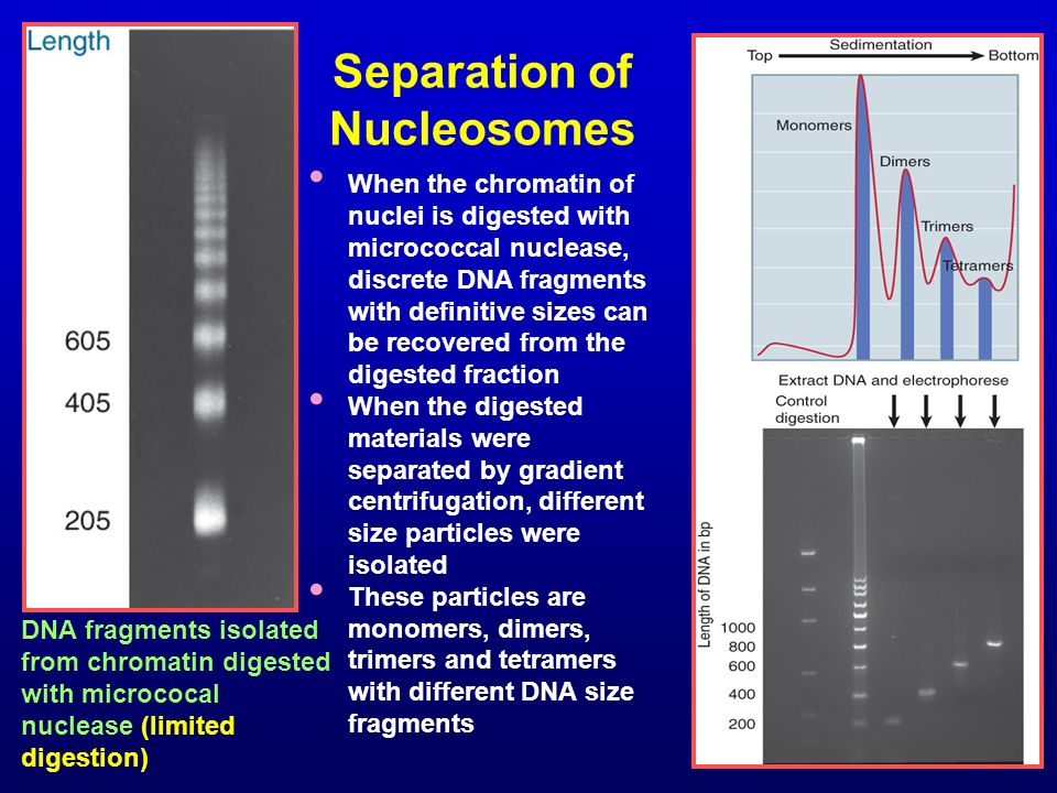 Separation of Nucleosomes