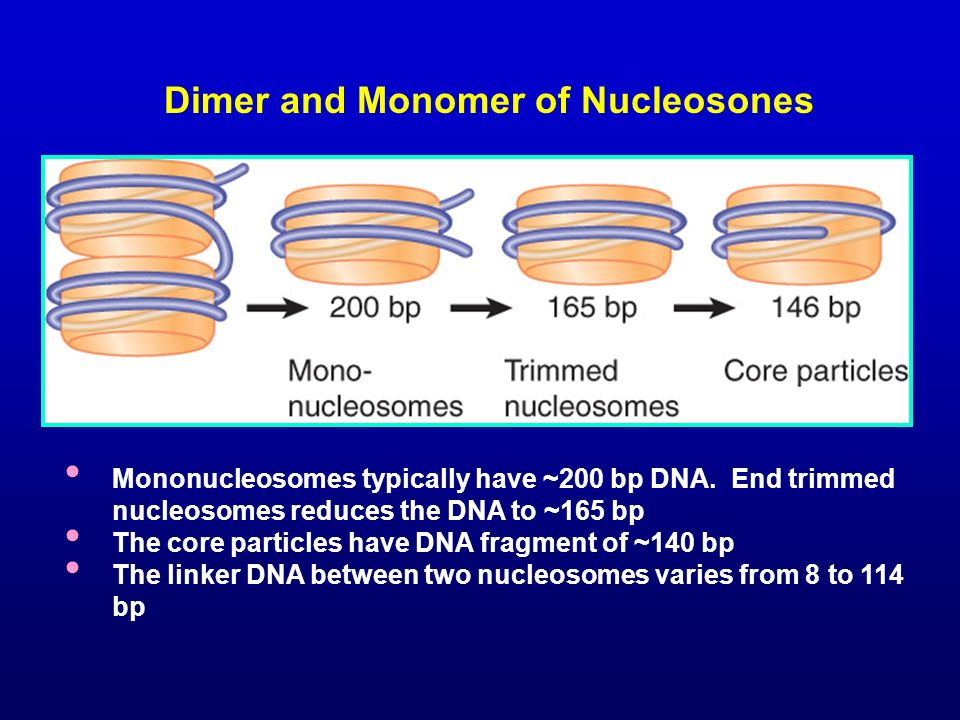 Dimer and Monomer of Nucleosones