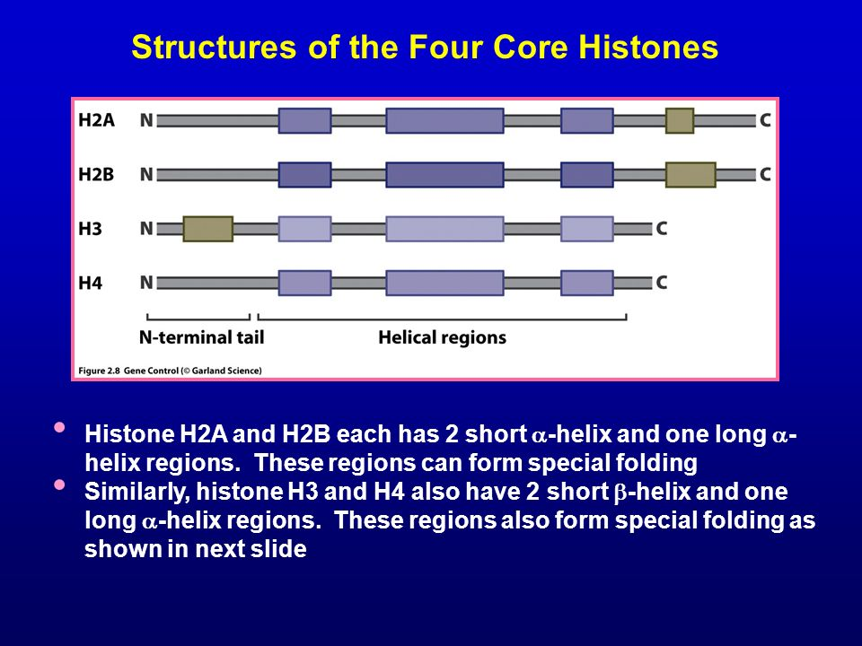 Structures of the Four Core Histones