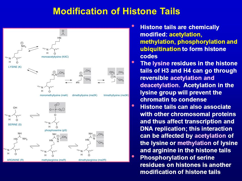 Modification of Histone Tails