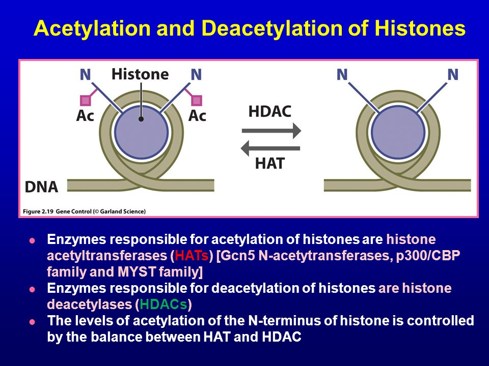 Acetylation and Deacetylation of Histones