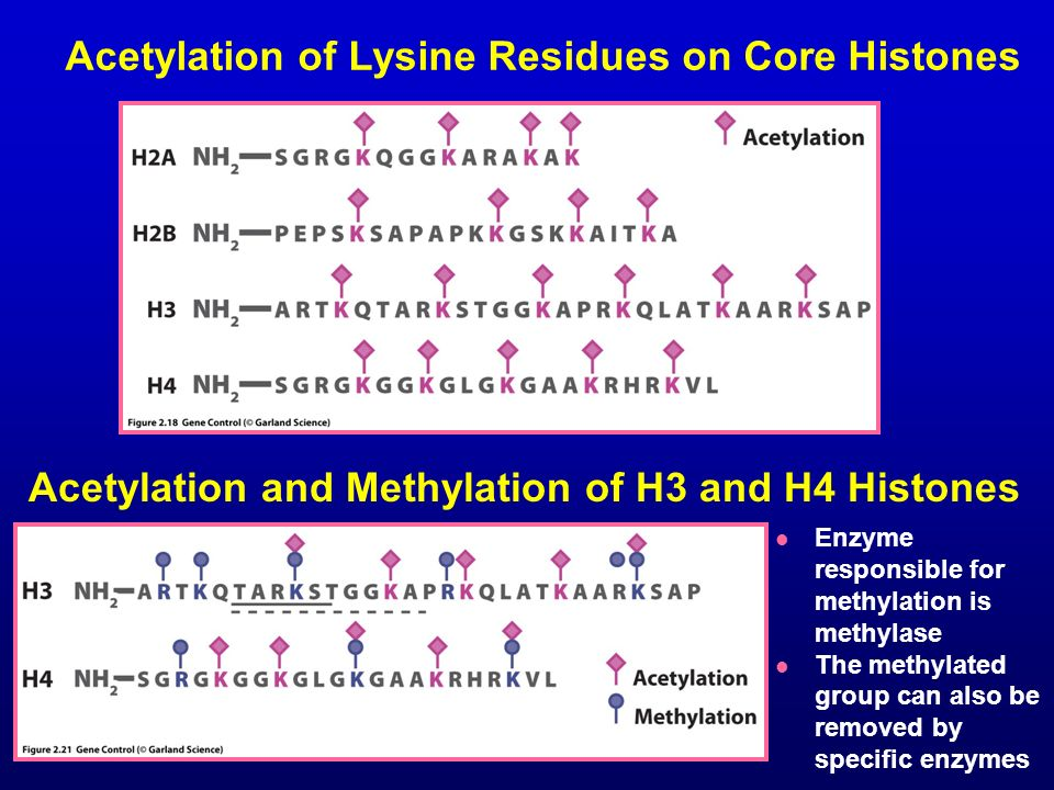Acetylation of Lysine Residues on Core Histones