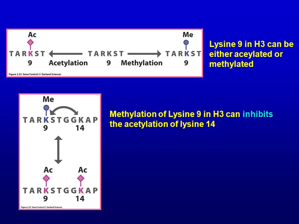 Lysine 9 in H3 can be either aceylated or methylated
