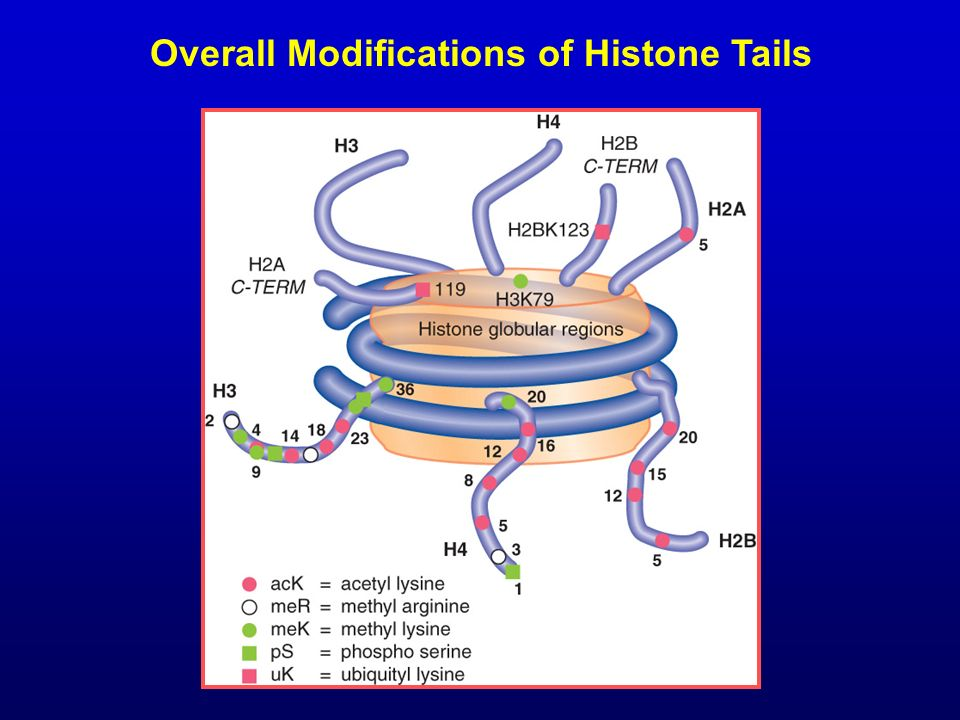 Overall Modifications of Histone Tails