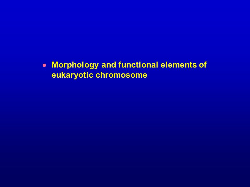 Morphology and functional elements of eukaryotic chromosome