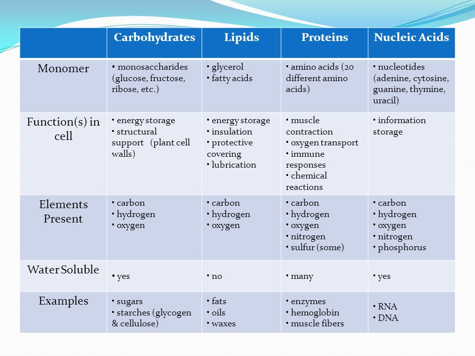 structure function relationship of carbohydrates proteins and lipids