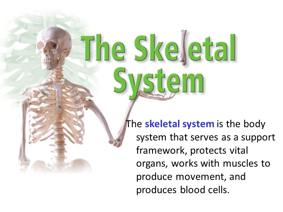 The skeletal system is the body system that serves as a support 1 the skeletal system is the body system that serves as a support framework protects vital organs works with muscles to produce movement and produces ccuart Choice Image