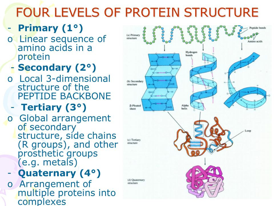 a description of proteins composed of polypeptide chains and non protein groups Blocks of proteins what a polypeptide chain is a protein is made from one or more polypeptide chains proteins form because non-polar r groups hide in.