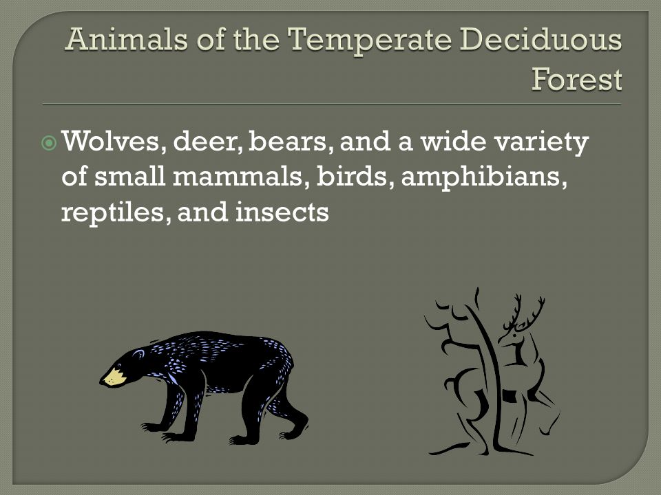 Animals of the Temperate Deciduous Forest